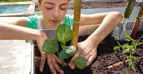 11 consejos para empezar a cultivar tus propios alimentos