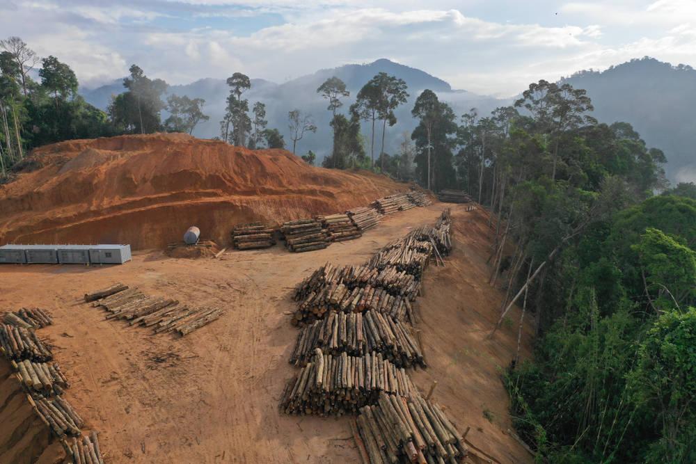 4 cortos que alertan sobre el problema de la deforestación