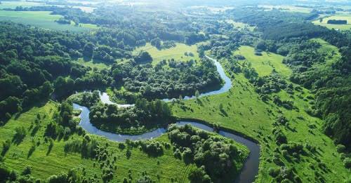 Irlanda plantará 440 millones de árboles para combatir el cambio climático