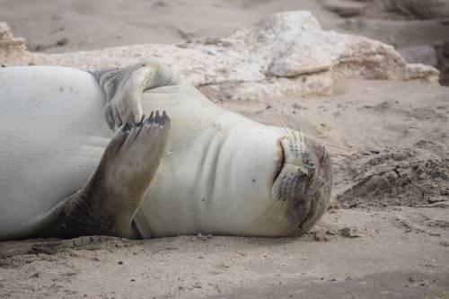 Estas fotografías de animales marinos te darán ganas de cuidarlos desde casa