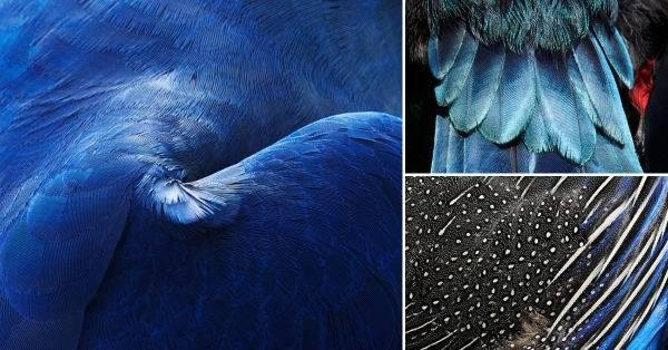 Imágenes impresionantes de plumajes