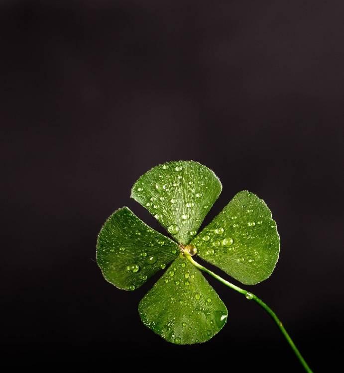 Conoce los amuletos de la buena suerte y su significado