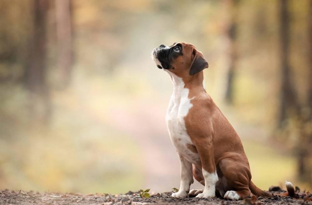 Son nuestros amigos: queda prohibido en España regalar animales como premio y..