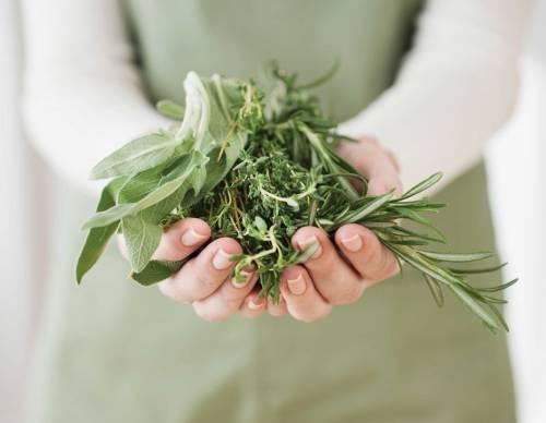 7 plantas medicinales que puedes cultivar en tu jardín