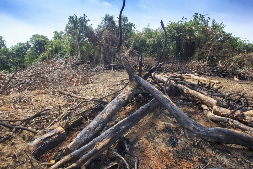deforestación, palmas