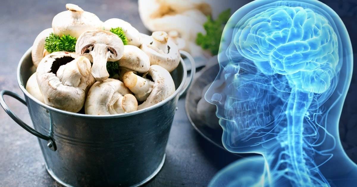 Descubren que comer hongos es bueno para el cerebro