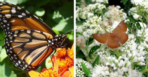Un jardín de mariposas en la Ciudad