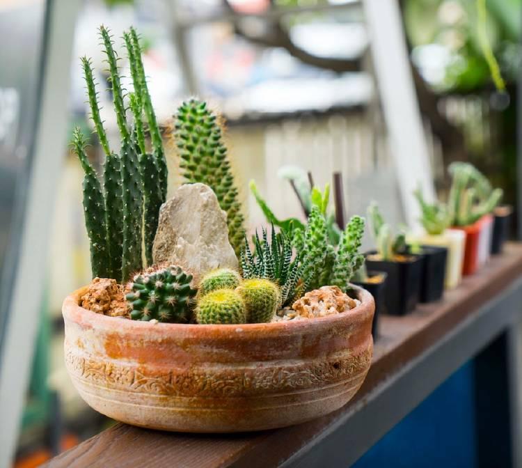 macetas de cactus en hogar oficina