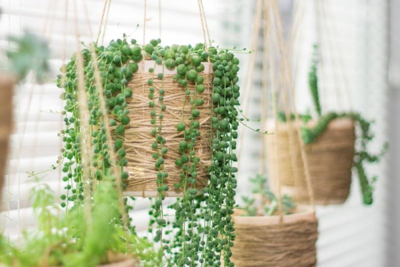 6 plantas negativas que no deber as tener dentro de casa si buscas atraer energ a positiva Como atraer energia positiva en casa