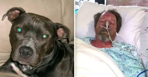 Un lametazo de perro hizo que este hombre perdiera sus piernas. ¿Cómo pudo suceder?