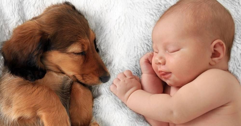 ¿Por qué tener una mascota en casa es bueno para tu bebé?