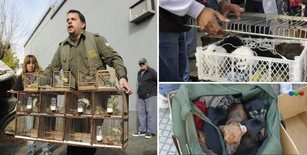 Rescatan en Buenos Aires a cientos de animales del mercado negro