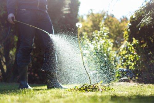glifosato herbicida shutterstock_1196887114