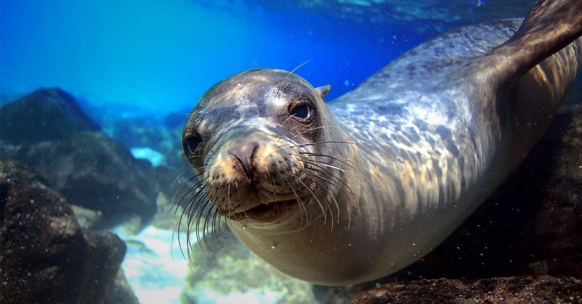 Alerta por el estado de conservación de Galápagos