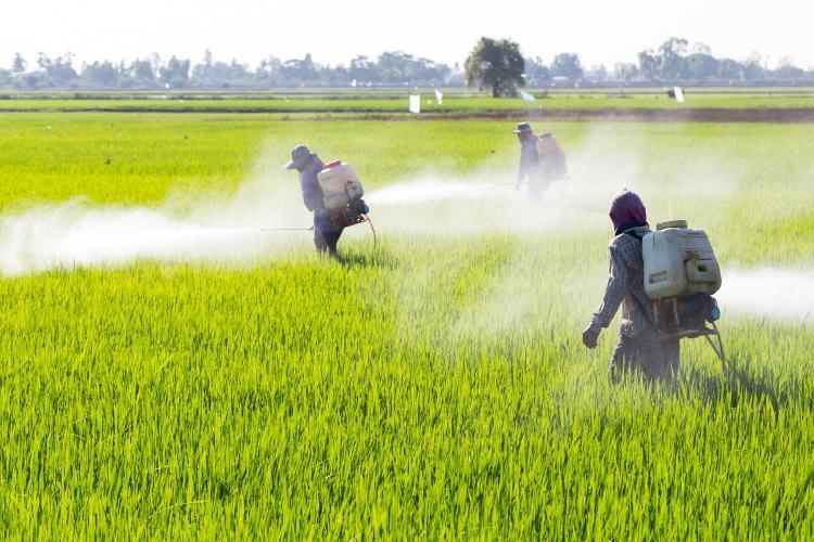 Uso de pesticidas en un campo