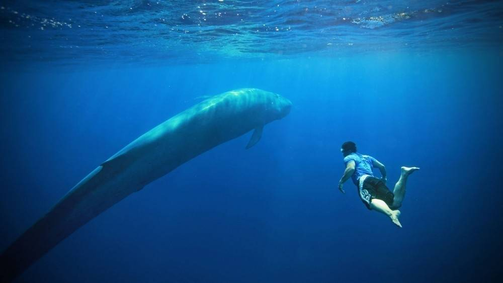 8 datos curiosos del animal más grande de la historia