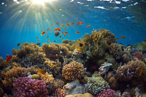Océanos 2050: entre mares de plástico y ambiciosos planes de restauración