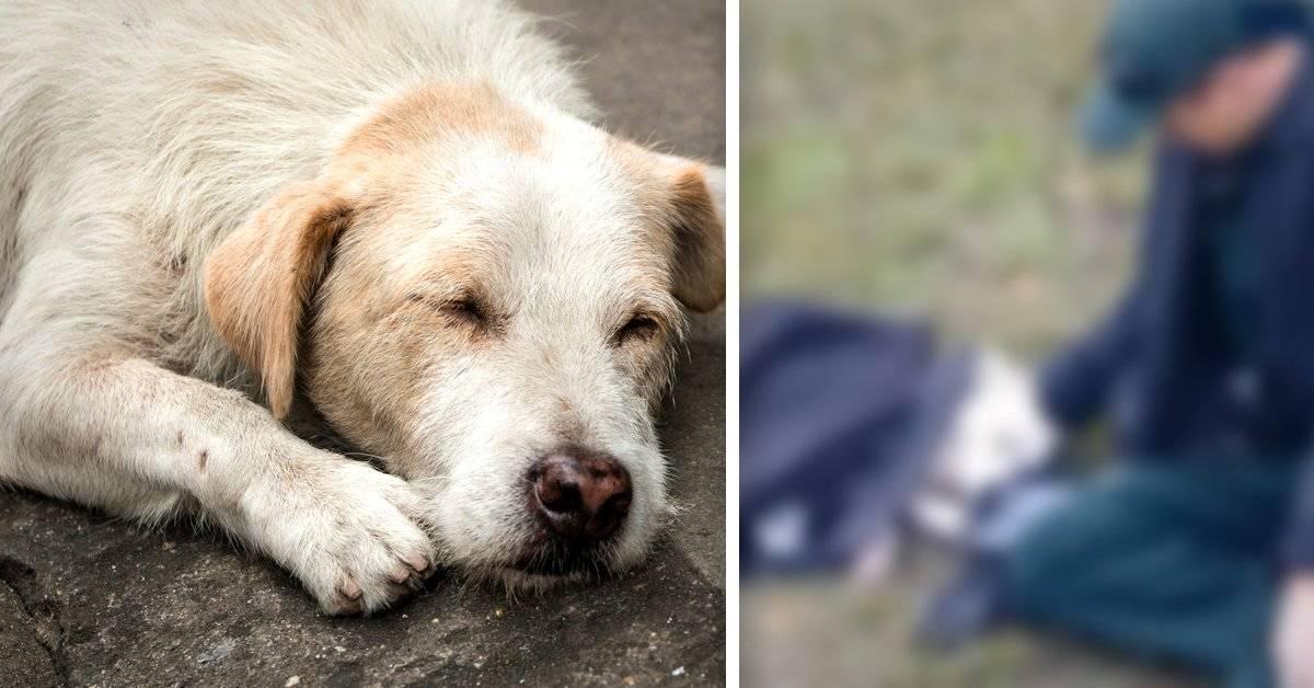 Un policía cubrió con su abrigo a una perrita herida y se hizo viral