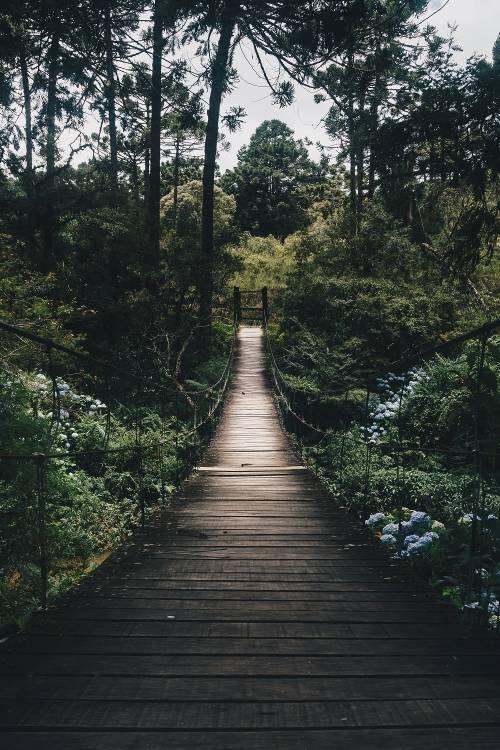 Proyectos de reforestación