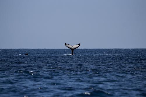 Descubren una nueva especie de ballena en las costas de Florida
