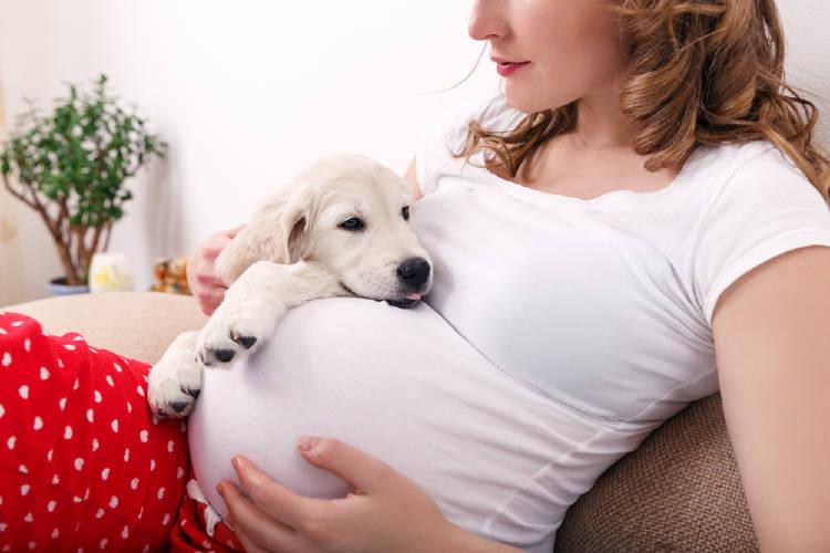 mujer embarazada perro