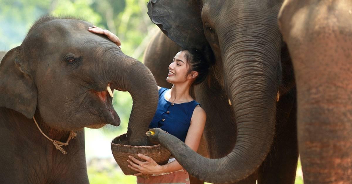 Conoce el primer hospital para elefantes maltratados