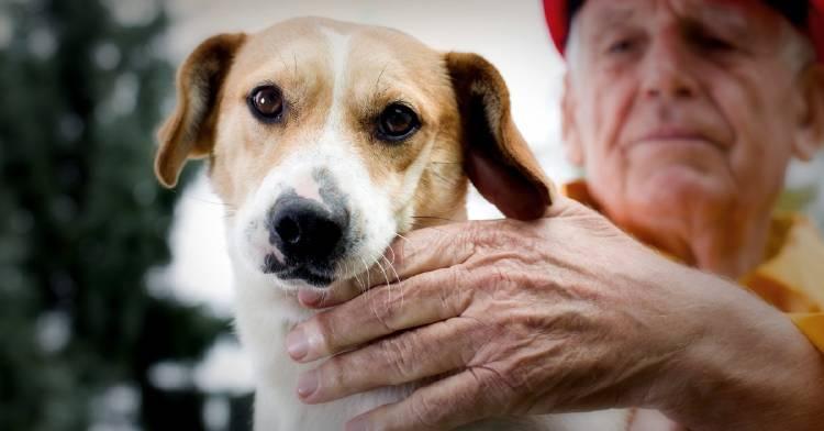 Protege a tu mascota cuando ocurre un desastre natural