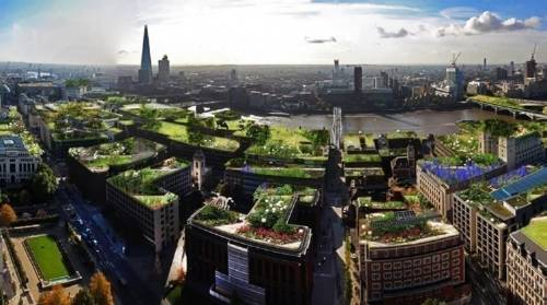 ¿Cuáles son las mejores plantas para los techos verdes?