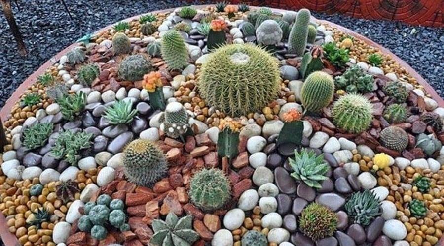 10 ideas para renovar y llenar de energ a tu patio o jard n - Jardines con cactus y piedras ...