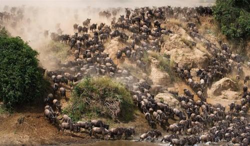 El mayor espectáculo de África: la migración de los ñus en el Parque Nacional Se
