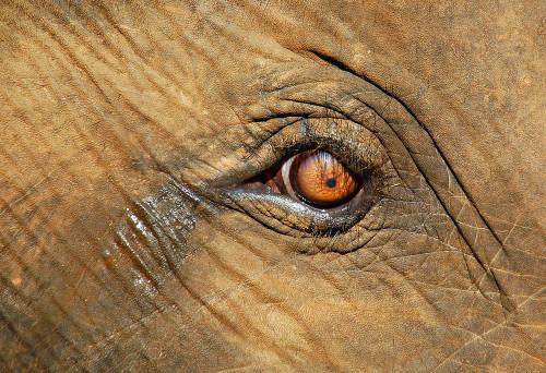 El caso de la muerte de la elefanta embarazada que indigna al mundo entero