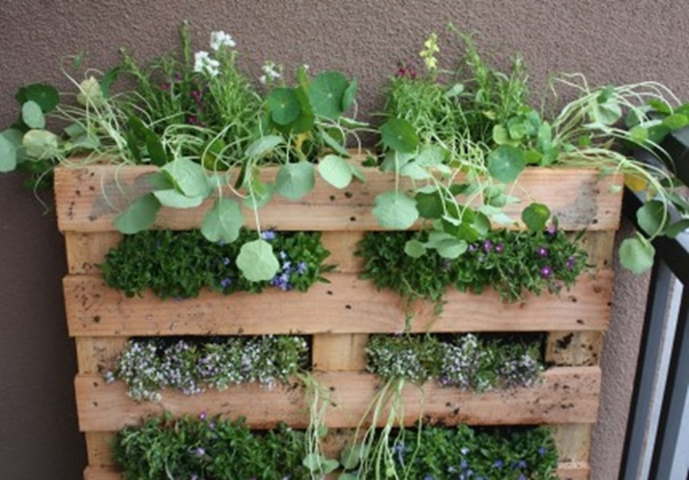 C mo hacer un jard n vertical en un palet paso a paso for Como realizar un jardin vertical