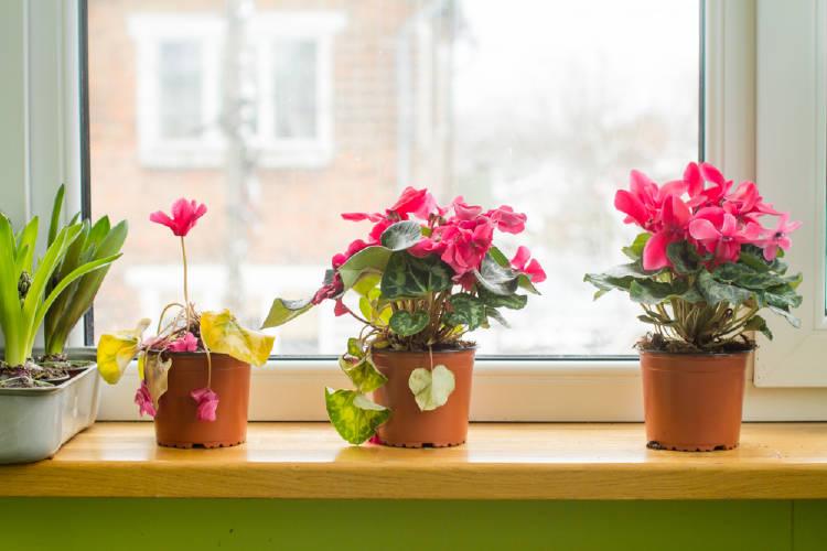 Flores en macetas al lado de una ventana
