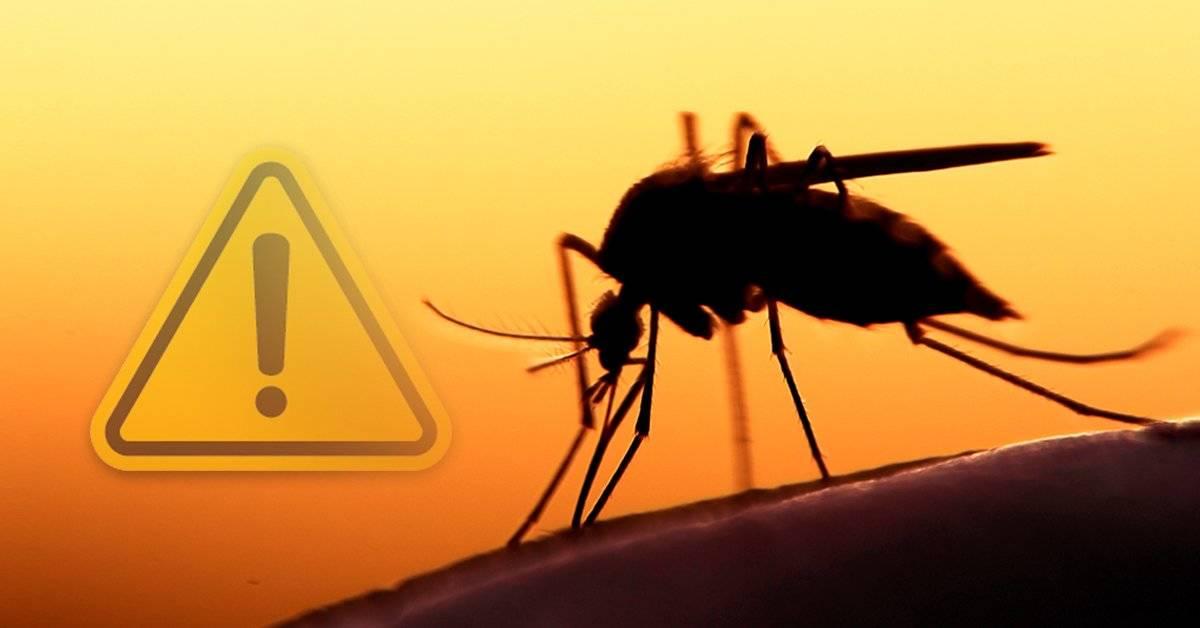 El peligro que nadie sospecha del mosquito