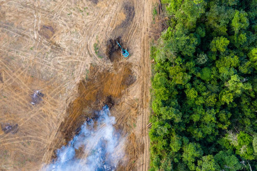 El Amazonas perdió 8 millones de campos de fútbol por deforestación