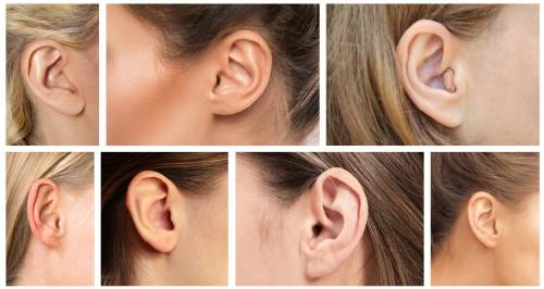 Qué dice la forma de tus orejas sobre tu salud