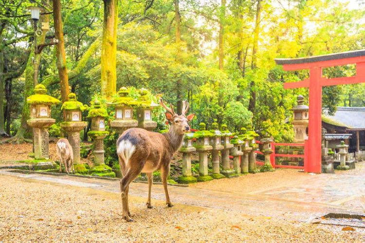 parque nara venado japon