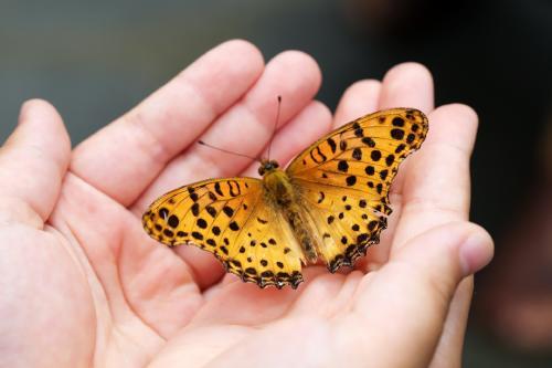 que significa que una mariposa se pose en ti