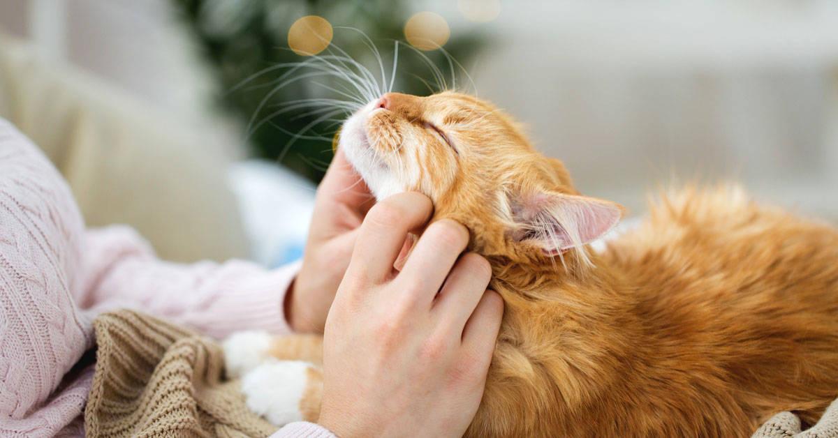 9 maneras de mostrarle amor a tus gatos que ellos pueden entender y les encantan