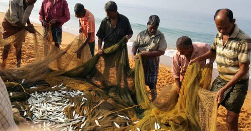 3 razones para considerar dejar de comer pescado