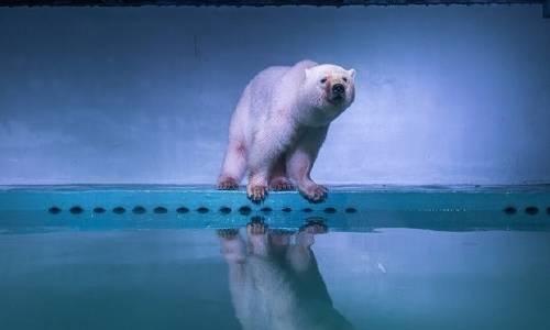 El oso polar que vive en un centro comercial conmueve al mundo