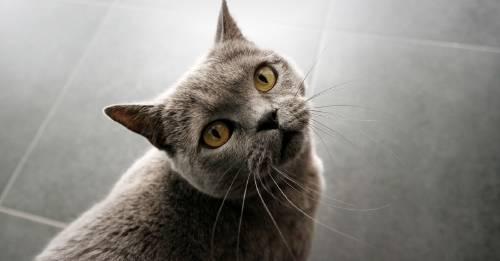 Los gatos reconocen sus propios nombres cuando los llamas, pero igual te ignoran