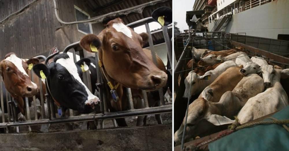 7 cosas que nadie te cuenta sobre la industria de la carne