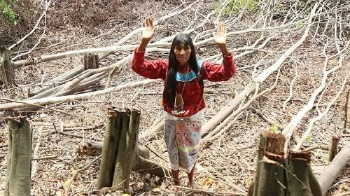 Ayuda a salvar el pulmón del mundo: ¡el Amazonas!