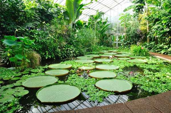 Jard n bot nico de edimburgo for Bioguia jardines
