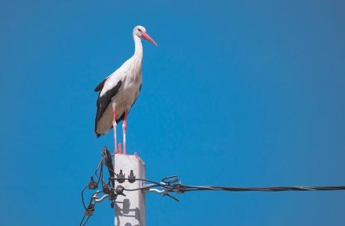 España: Denuncian a gigante energético por cientos de pájaros electrocutados
