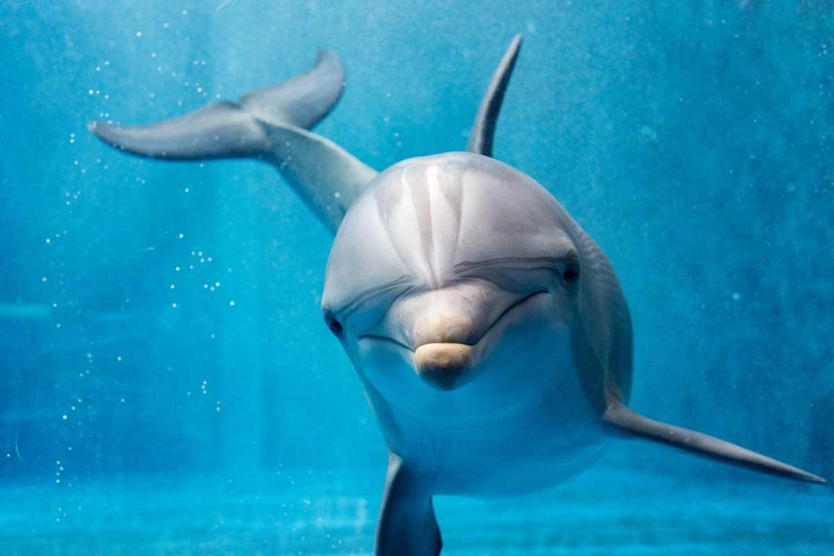 Crean un delfín robot para sustituir a los que están en cautiverio en acuarios