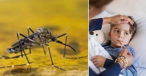 Alerta por fiebre amarilla: recordamos cómo prevenirla