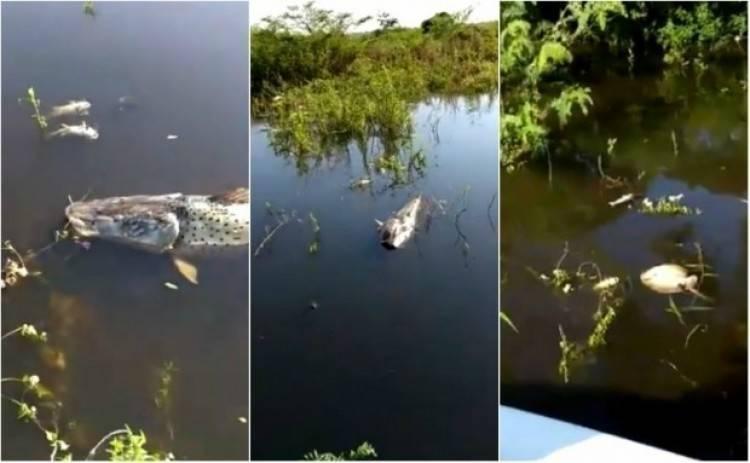 ¿Por qué no paran de aparecer peces muertos en el río Paraná?