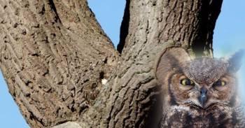 Desafío viral para expertos: ¿puedes encontrar al búho en el árbol?